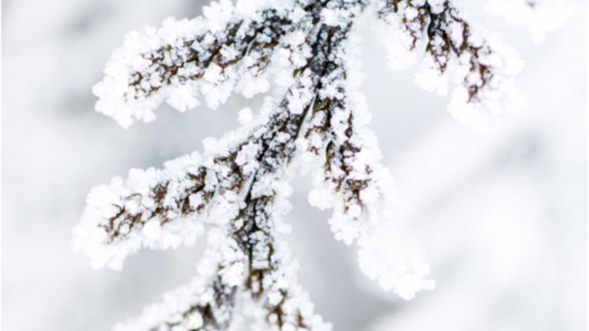 Frosty Ferns 3